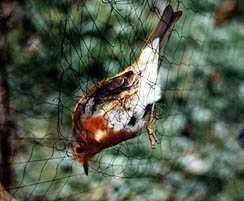 TUZAKLAR TUZAK ÇEŞİTLERİ Wildbird